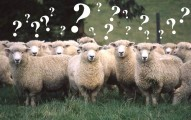 Sheep questions