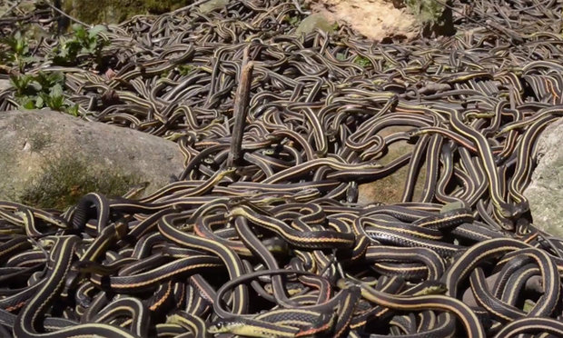 Pit of snakes